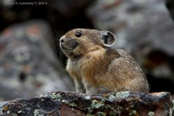 ppsr_asc_pika_project