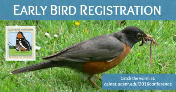 Early Bird Facebook Twitter LinkedIn