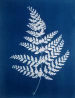 Cyanotype-Fern